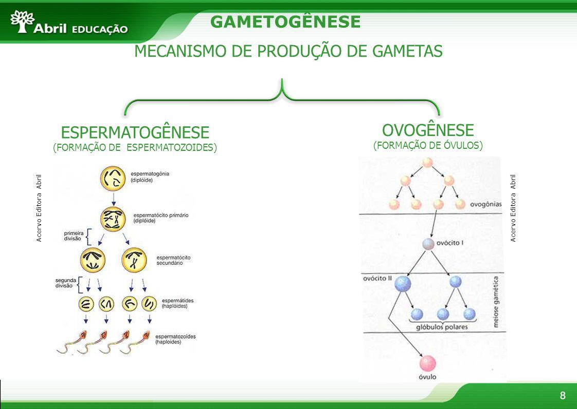 MECANISMO DE PRODUÇÃO DE GAMETAS