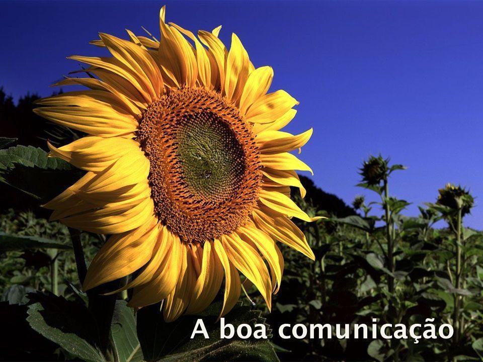 A boa comunicação