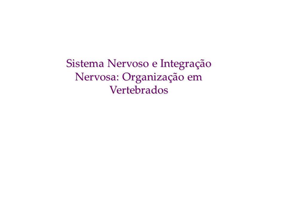 Sistema Nervoso e Integração Nervosa: Organização em Vertebrados