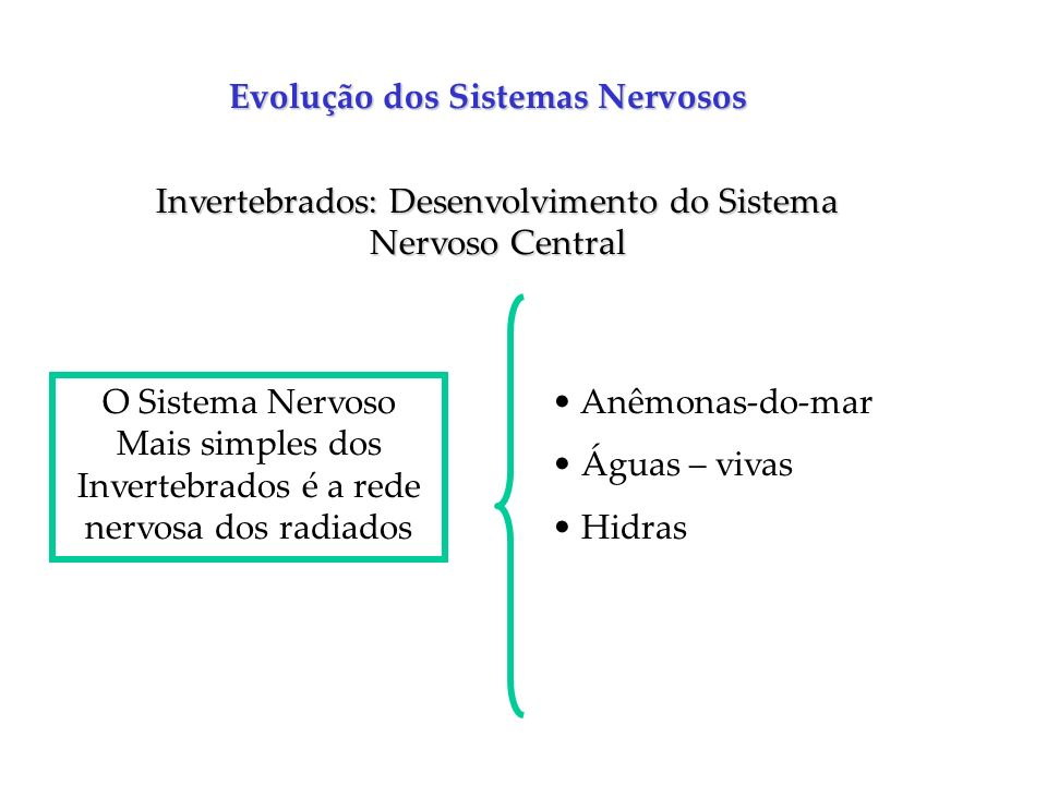 Invertebrados: Desenvolvimento do Sistema Nervoso Central