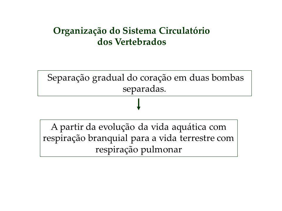 Organização do Sistema Circulatório dos Vertebrados
