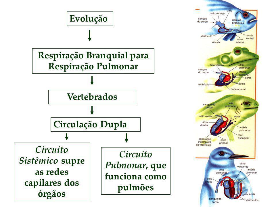 Respiração Branquial para Respiração Pulmonar