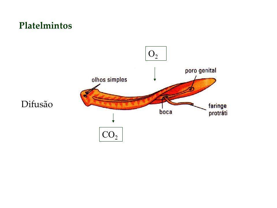 Platelmintos O2 Difusão CO2