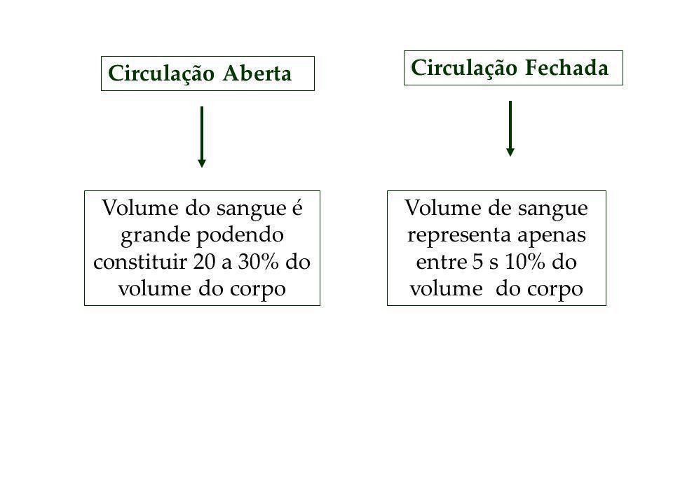 Volume de sangue representa apenas entre 5 s 10% do volume do corpo