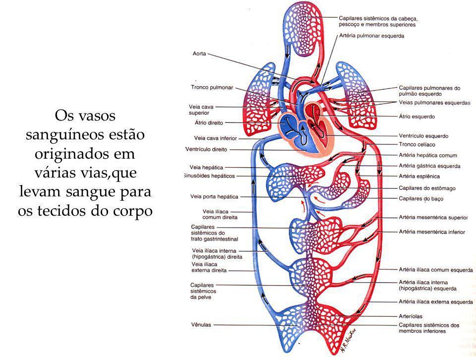 Os vasos sanguíneos estão originados em várias vias,que levam sangue para os tecidos do corpo