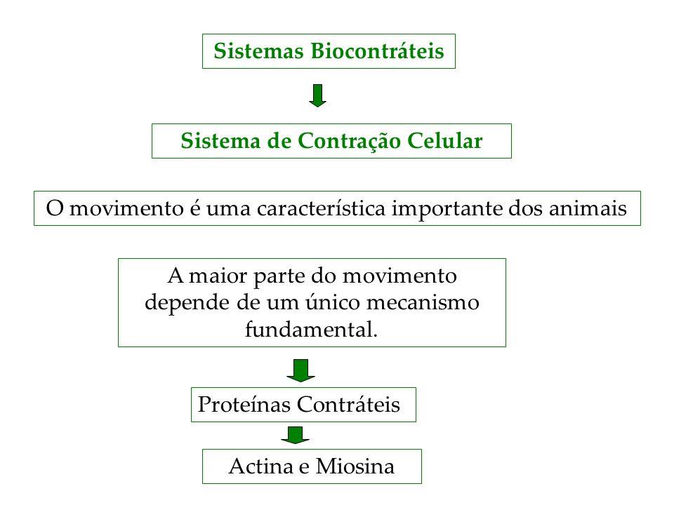 Sistemas Biocontráteis Sistema de Contração Celular