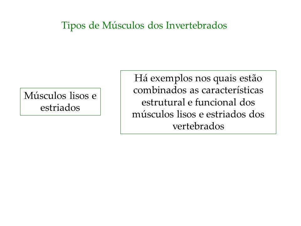 Tipos de Músculos dos Invertebrados