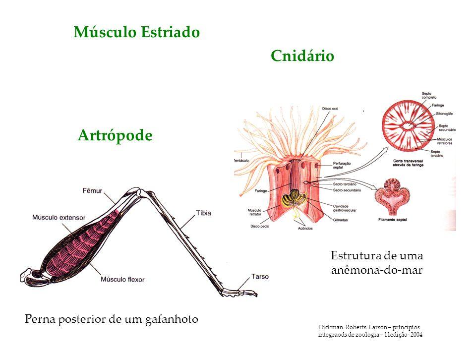 Estrutura de uma anêmona-do-mar