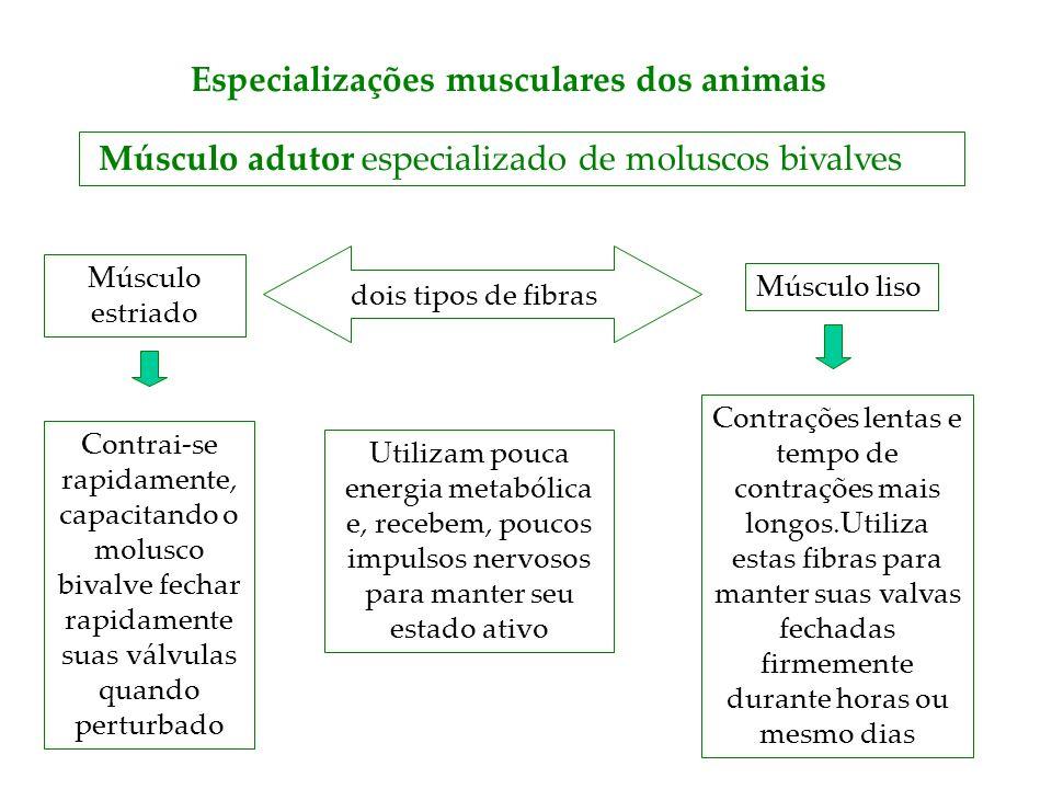 Especializações musculares dos animais