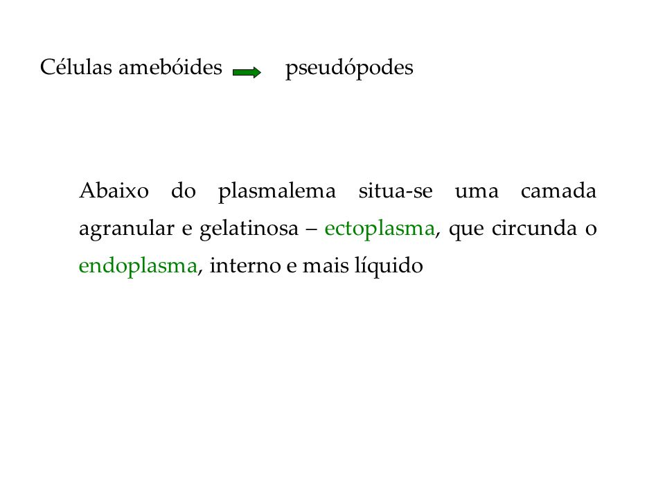 Células amebóides pseudópodes