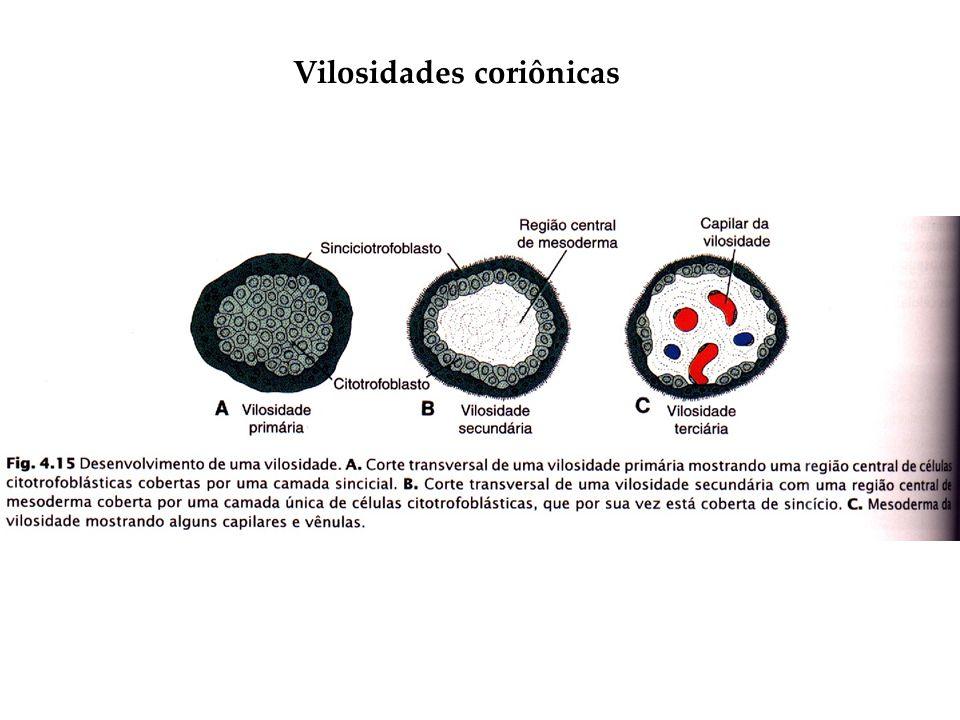 Vilosidades coriônicas
