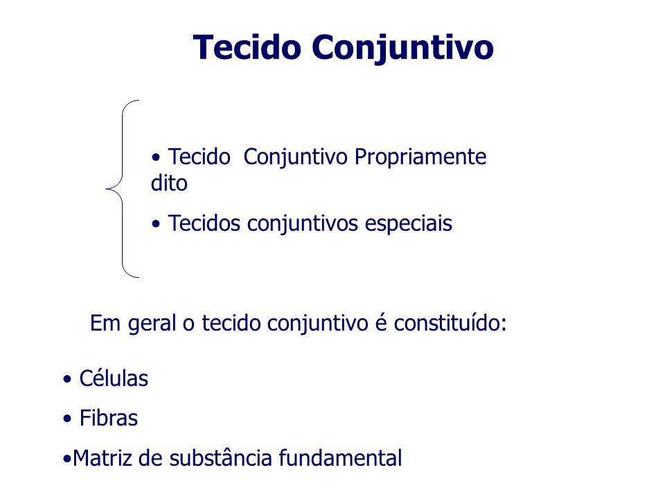 Tecido Conjuntivo Tecido Conjuntivo Propriamente dito