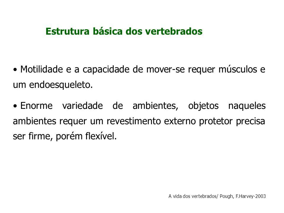 Estrutura básica dos vertebrados