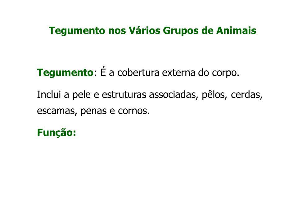 Tegumento nos Vários Grupos de Animais