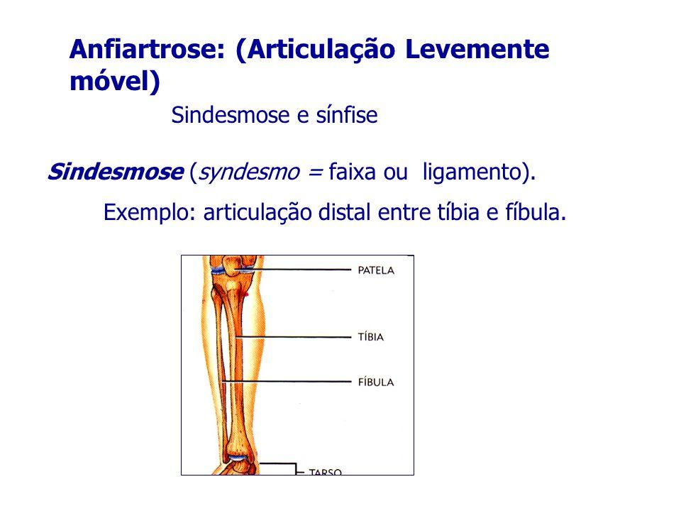 Anfiartrose: (Articulação Levemente móvel)