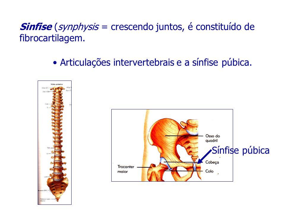 Sinfise (synphysis = crescendo juntos, é constituído de fibrocartilagem.