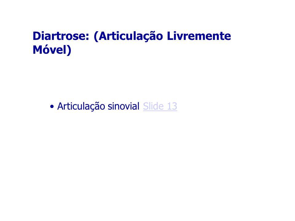 Diartrose: (Articulação Livremente Móvel)