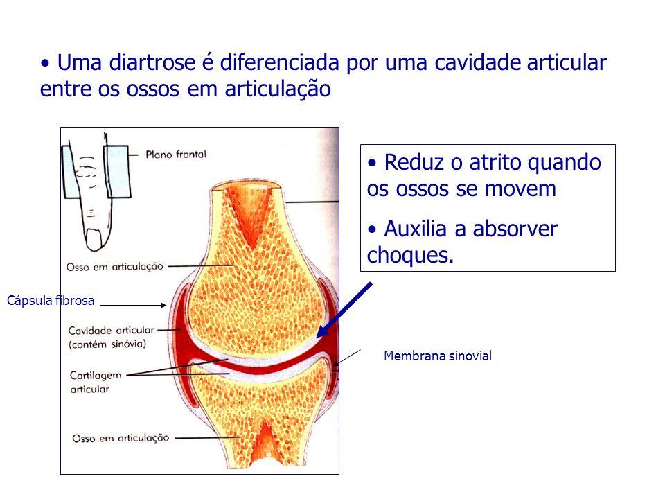 Reduz o atrito quando os ossos se movem Auxilia a absorver choques.
