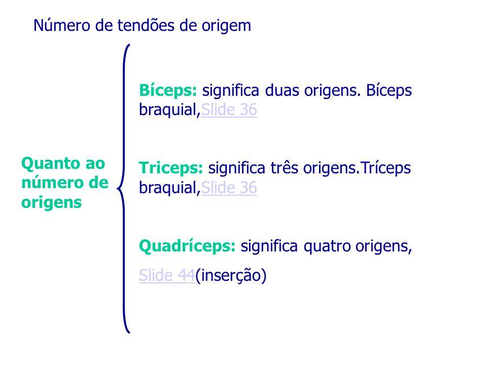 Número de tendões de origem