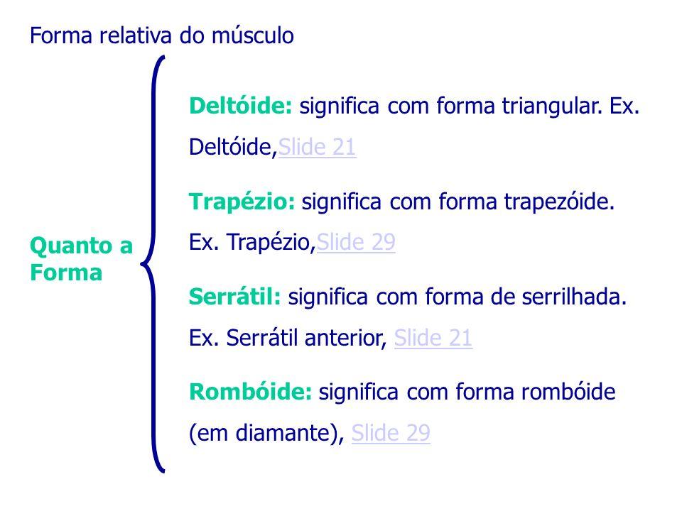 Forma relativa do músculo