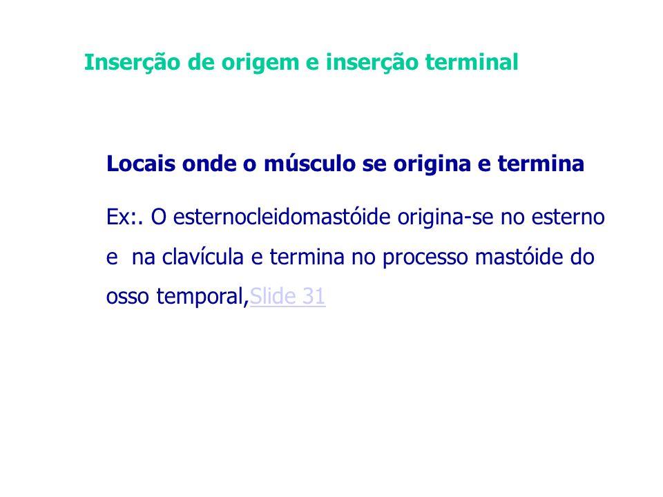 Inserção de origem e inserção terminal
