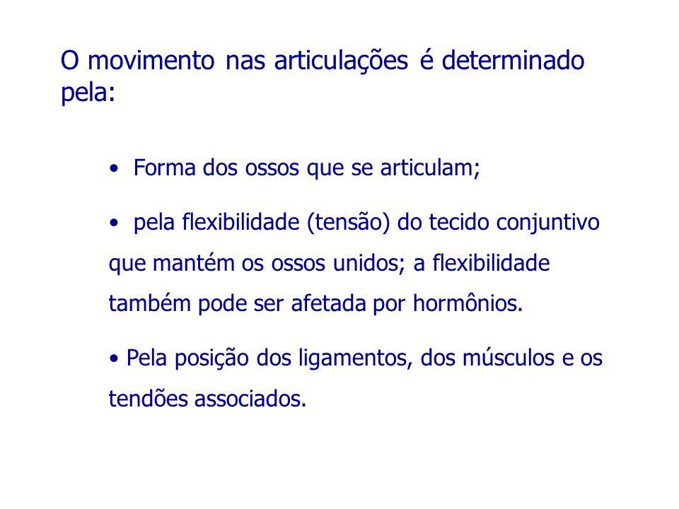 O movimento nas articulações é determinado pela: