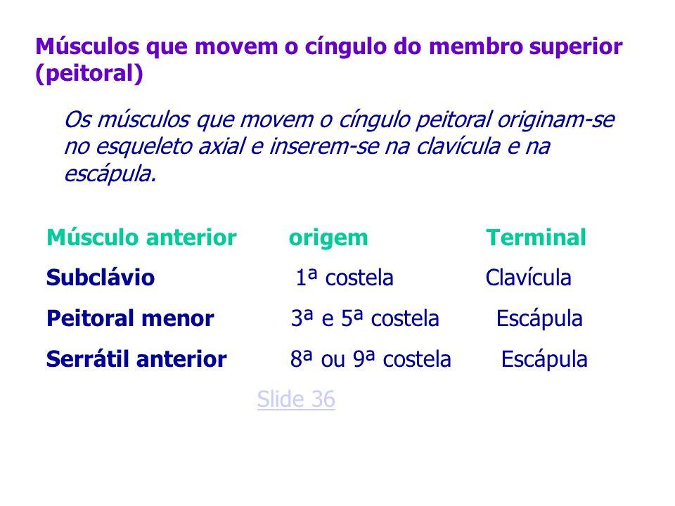 Músculos que movem o cíngulo do membro superior (peitoral)