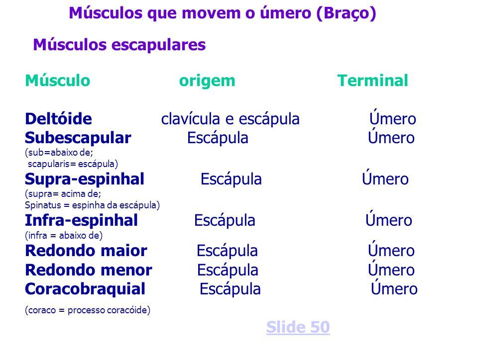 Músculos que movem o úmero (Braço)