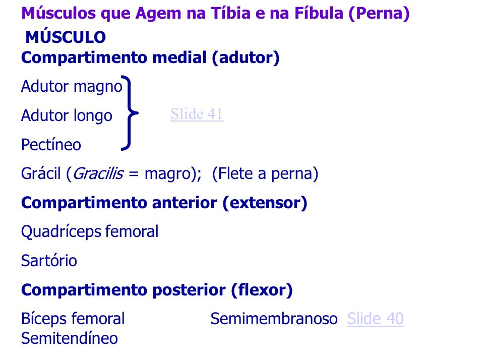 Músculos que Agem na Tíbia e na Fíbula (Perna)