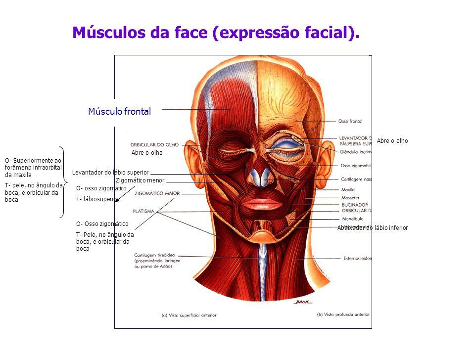 Músculos da face (expressão facial).
