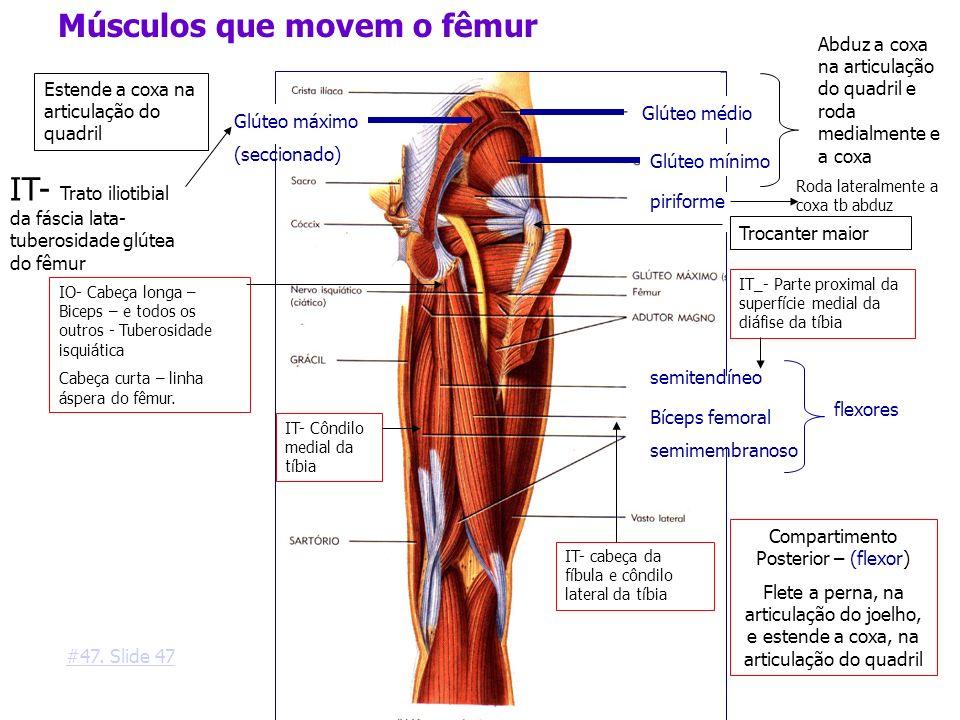 Compartimento Posterior – (flexor)