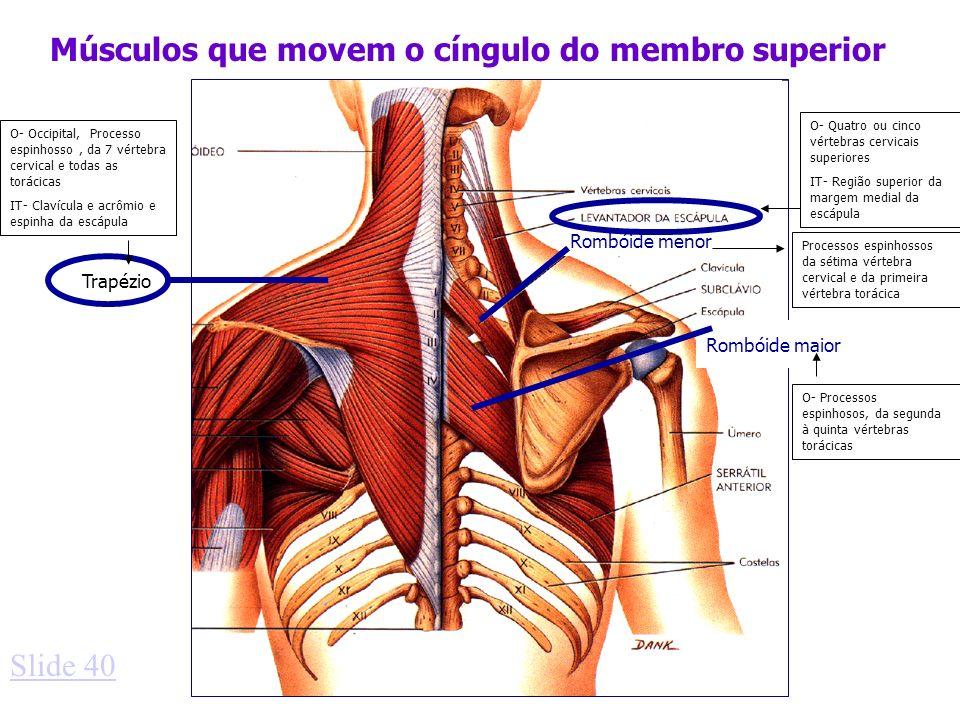 Músculos que movem o cíngulo do membro superior