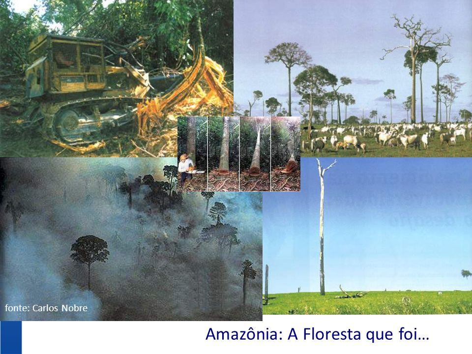 Amazônia: A Floresta que foi…