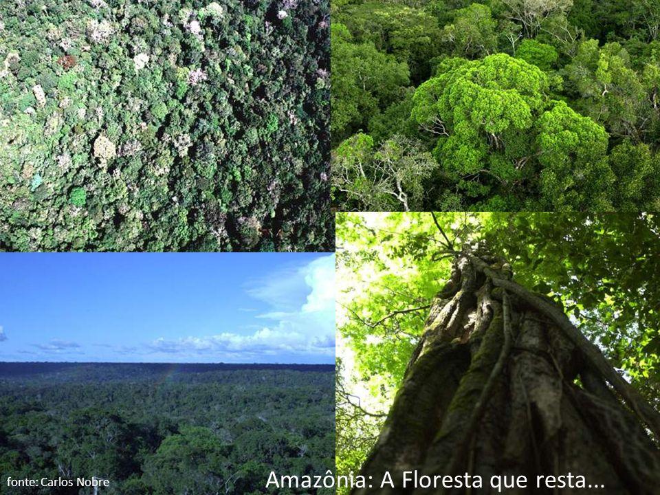 Amazônia: A Floresta que resta...