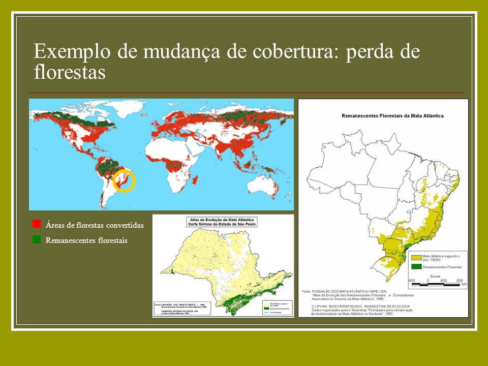 Exemplo de mudança de cobertura: perda de florestas