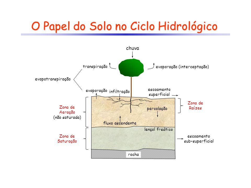 O Papel do Solo no Ciclo Hidrológico
