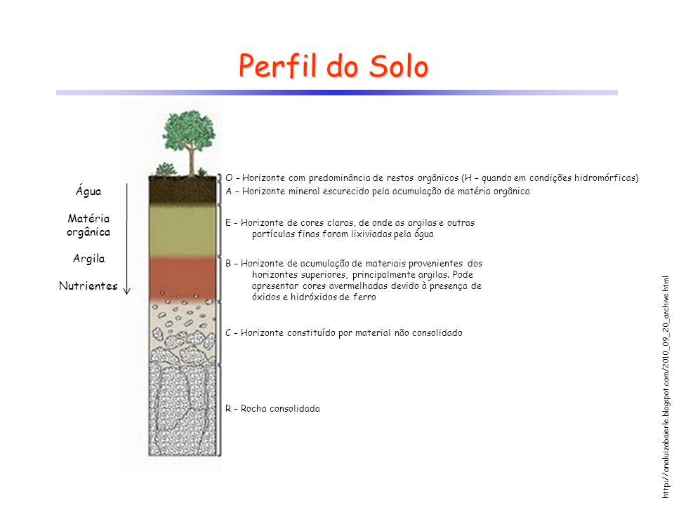 Perfil do Solo Água Matéria orgânica Argila Nutrientes