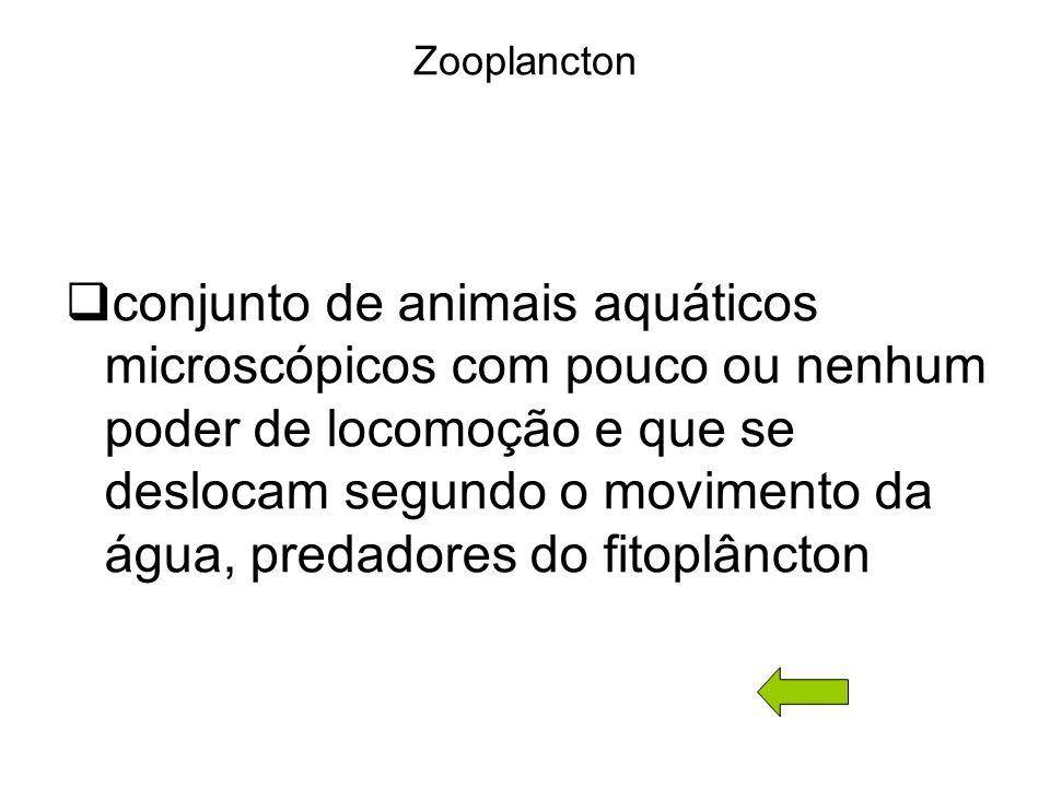 Zooplancton