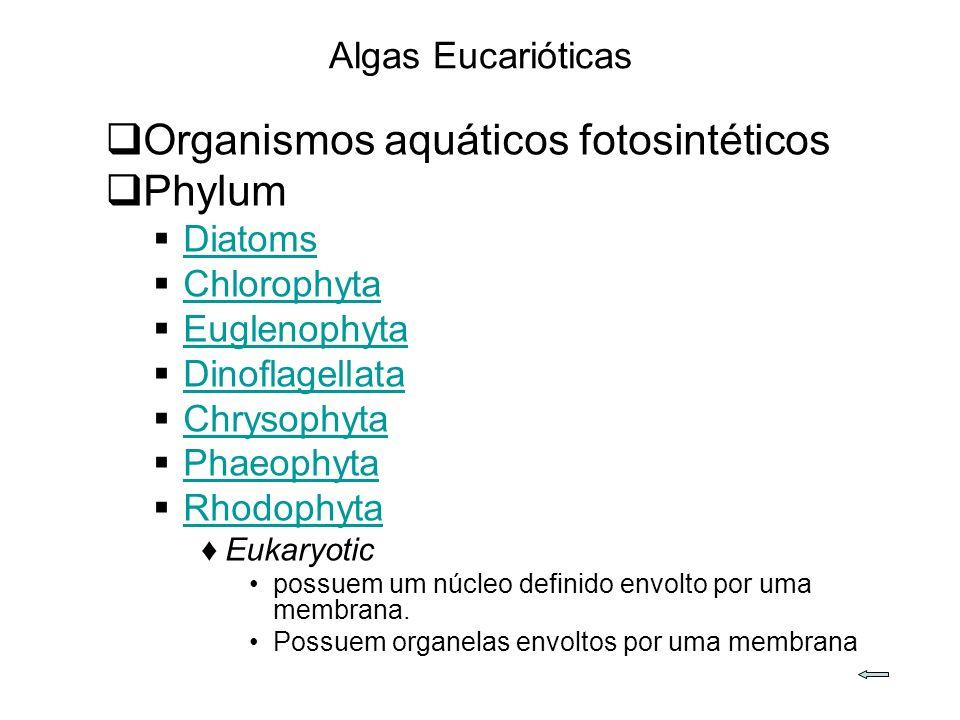 Organismos aquáticos fotosintéticos Phylum