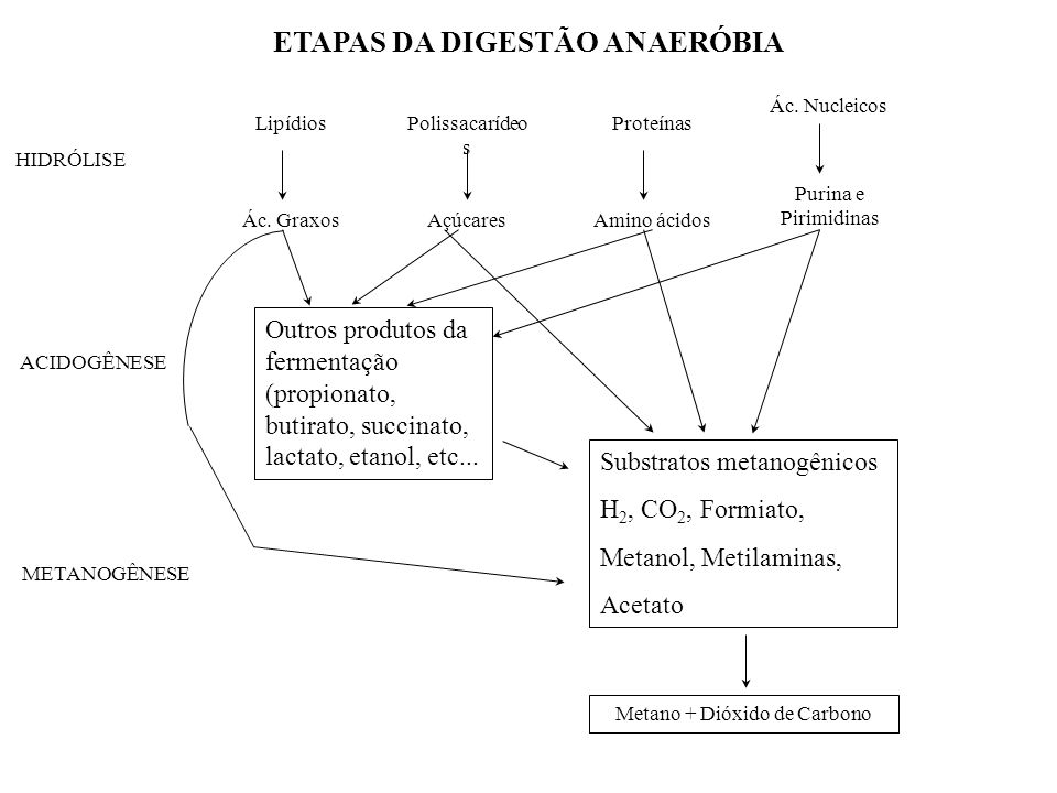 ETAPAS DA DIGESTÃO ANAERÓBIA