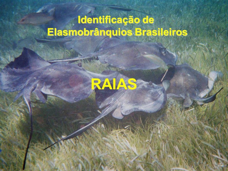 Elasmobrânquios Brasileiros