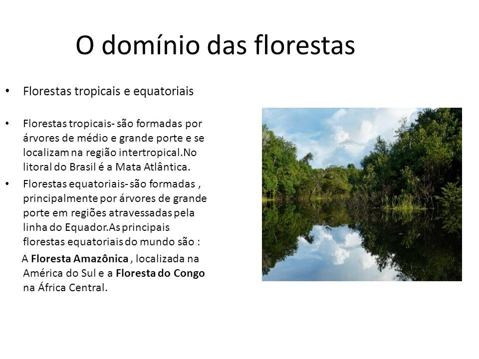 O domínio das florestas