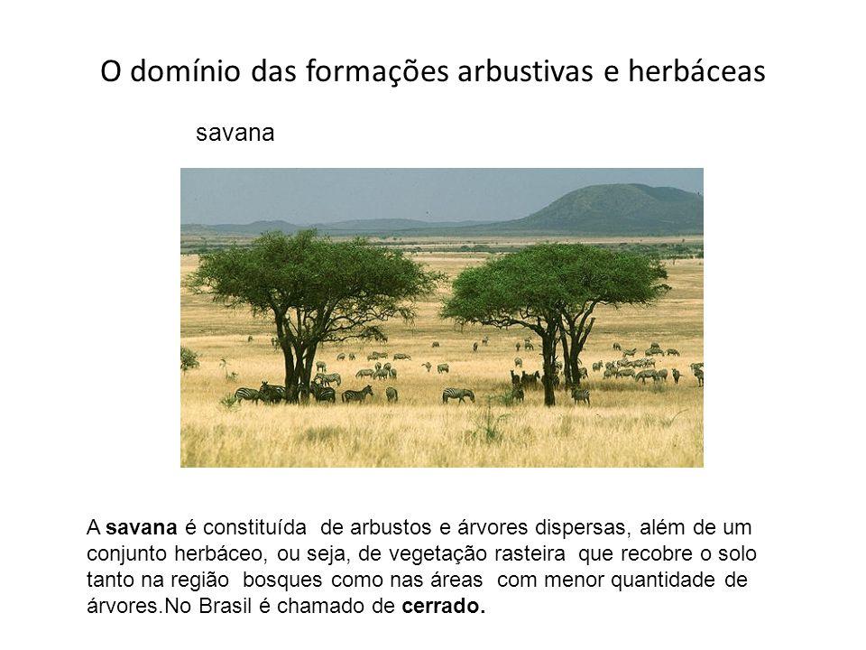 O domínio das formações arbustivas e herbáceas
