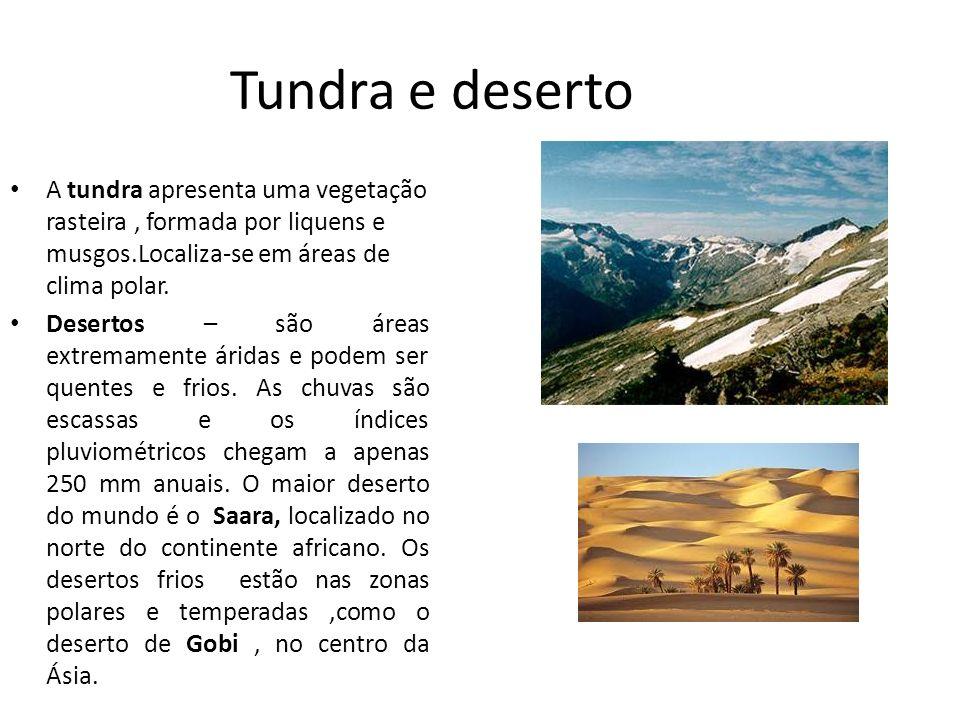 Tundra e deserto A tundra apresenta uma vegetação rasteira , formada por liquens e musgos.Localiza-se em áreas de clima polar.