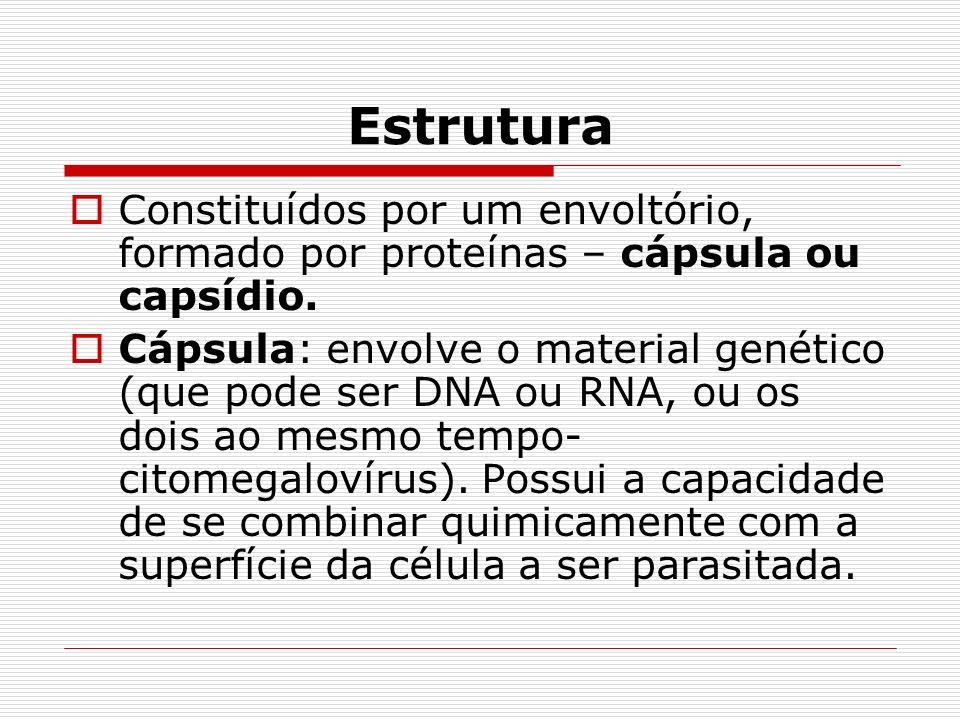 Estrutura Constituídos por um envoltório, formado por proteínas – cápsula ou capsídio.