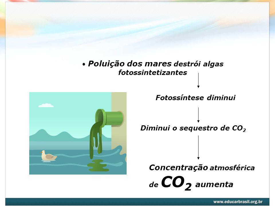 Poluição dos mares destrói algas fotossintetizantes