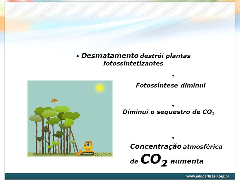 Desmatamento destrói plantas fotossintetizantes