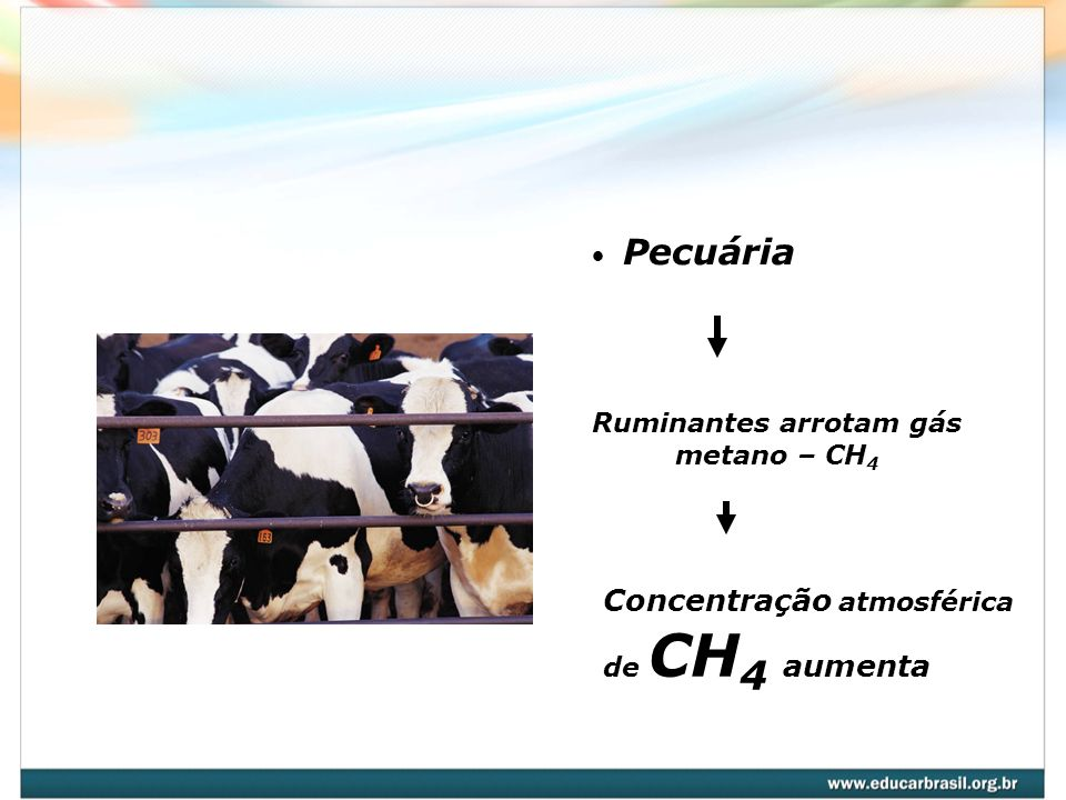Ruminantes arrotam gás metano – CH4
