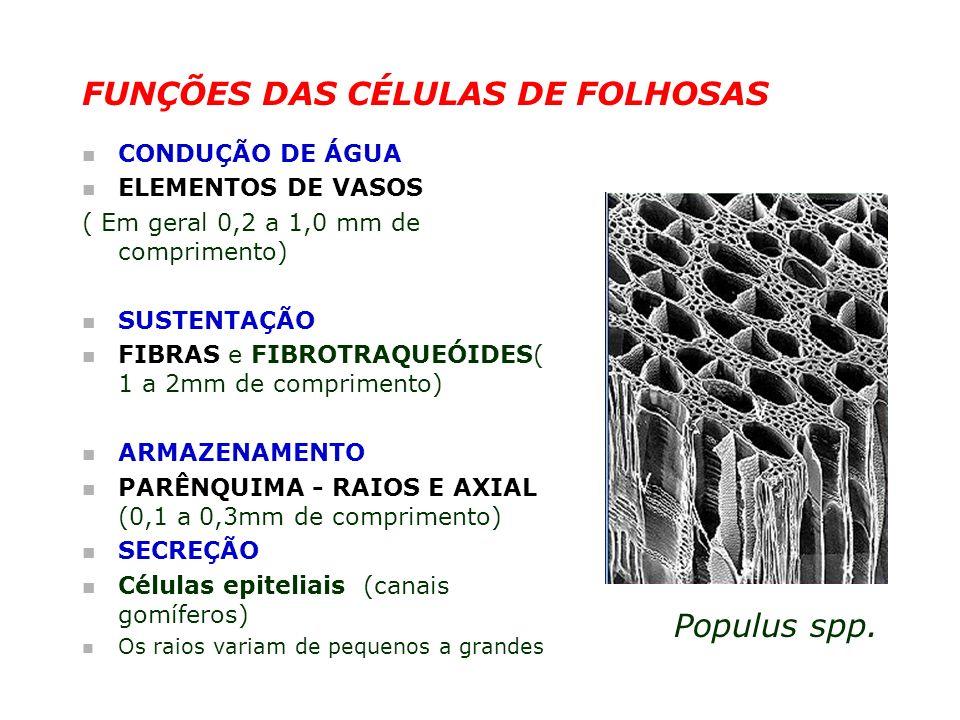 FUNÇÕES DAS CÉLULAS DE FOLHOSAS
