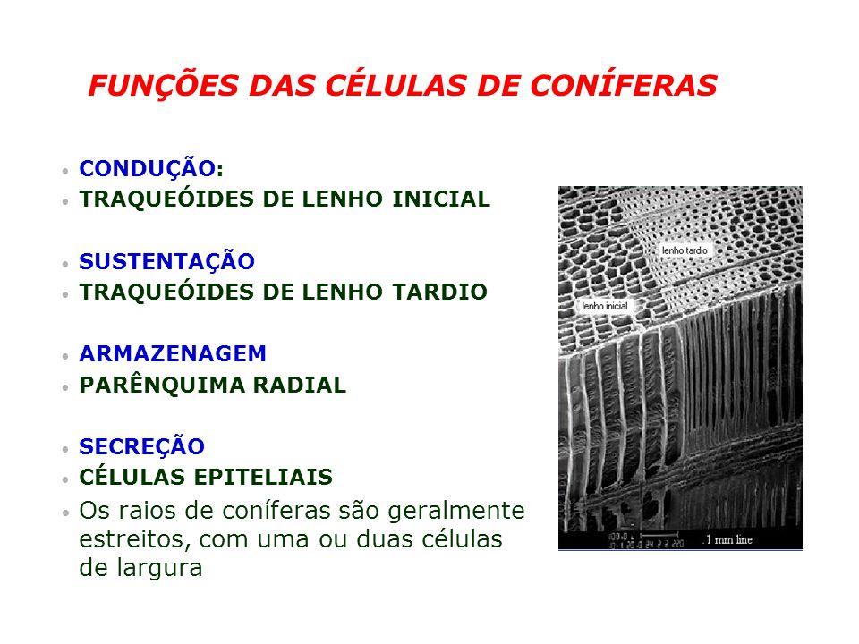 FUNÇÕES DAS CÉLULAS DE CONÍFERAS